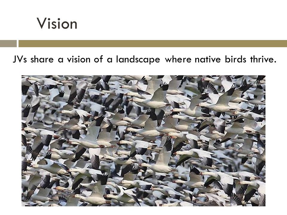 Vision JVs share a vision of a landscape where native birds thrive.