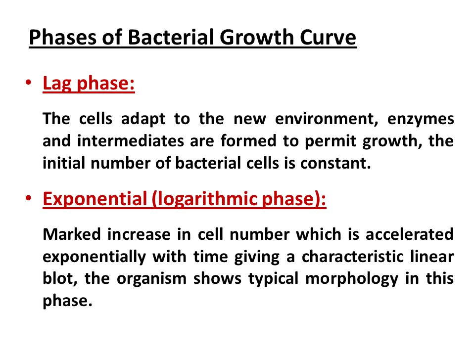 Phases of Bacterial Growth Curve Lag phase: The cells adapt to the new environment, enzymes and intermediates are formed to permit growth, the initial number of bacterial cells is constant.