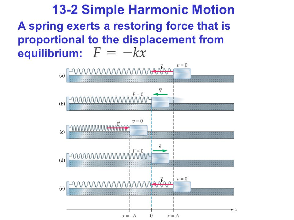 13-2 Simple Harmonic Motion A spring exerts a restoring force that is proportional to the displacement from equilibrium: