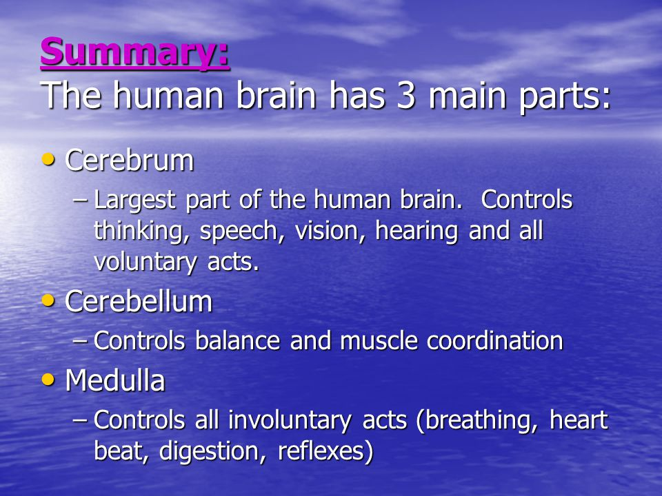 Aim what are the parts of the human brain and what is the summary the human brain has 3 main parts cerebrum cerebrum largest part of ccuart Images