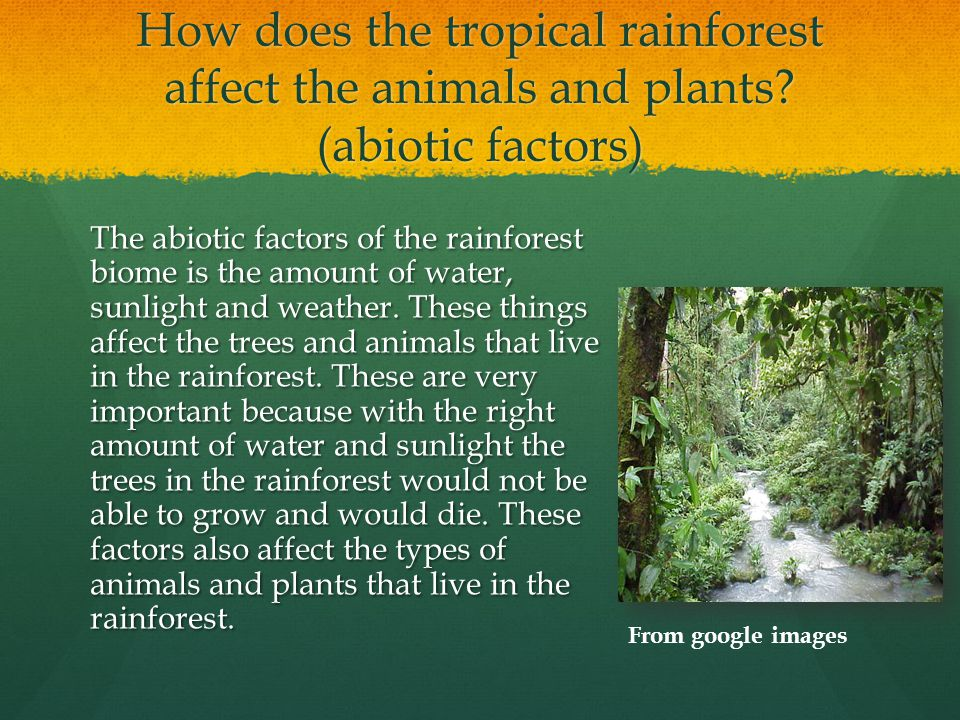 the importance of the tropical rainforests and the effects of its destruction What is deforestation find out the causes, effects, and solutions to deforestation modern-day plague deforestation is clearing earth's forests on a massive scale.
