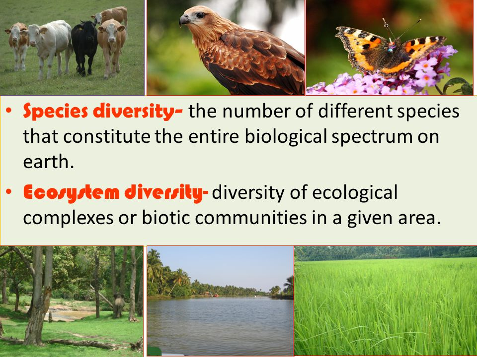 Species diversity- the number of different species that constitute the entire biological spectrum on earth.