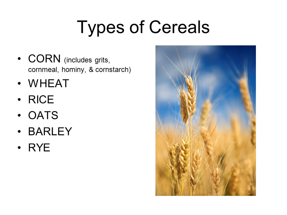 Types of Cereals CORN (includes grits, cornmeal, hominy, & cornstarch) WHEAT RICE OATS BARLEY RYE