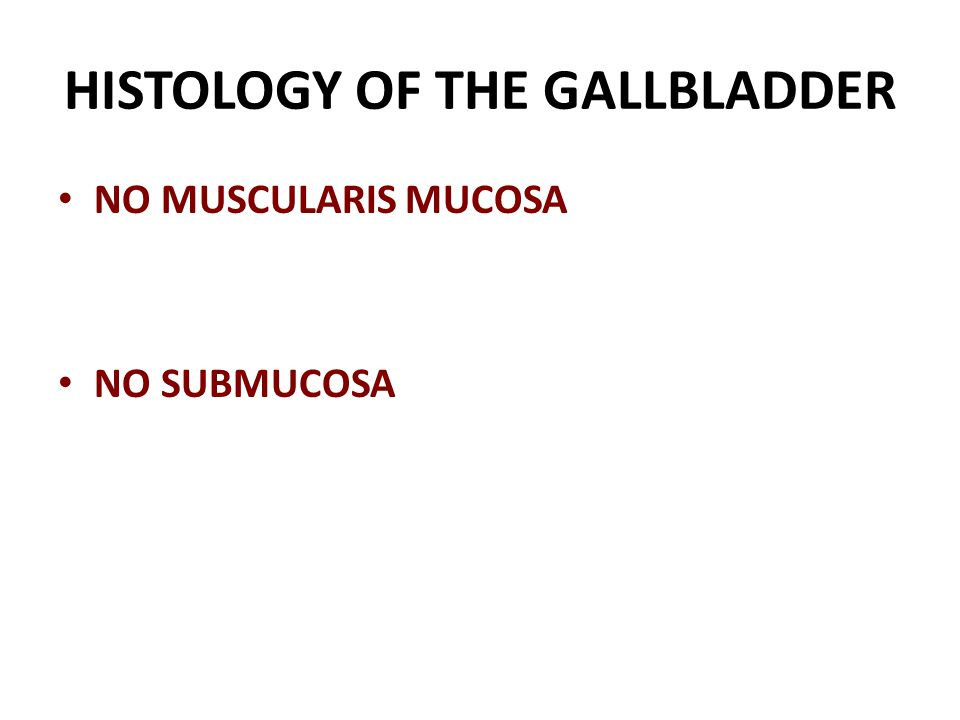 HISTOLOGY OF THE GALLBLADDER NO MUSCULARIS MUCOSA NO SUBMUCOSA