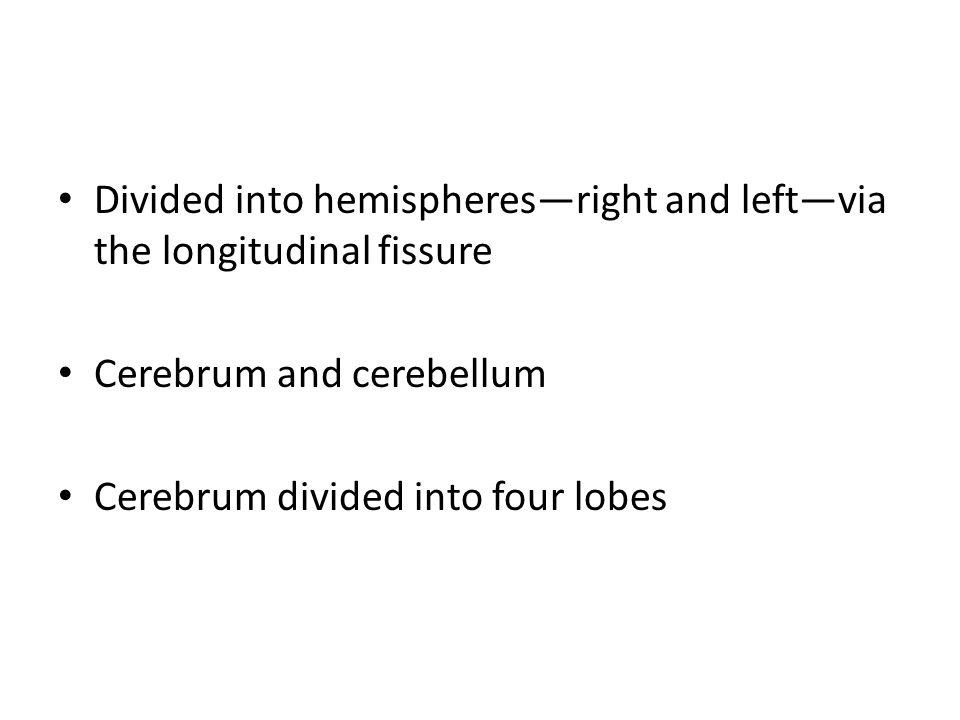 Divided into hemispheres—right and left—via the longitudinal fissure Cerebrum and cerebellum Cerebrum divided into four lobes