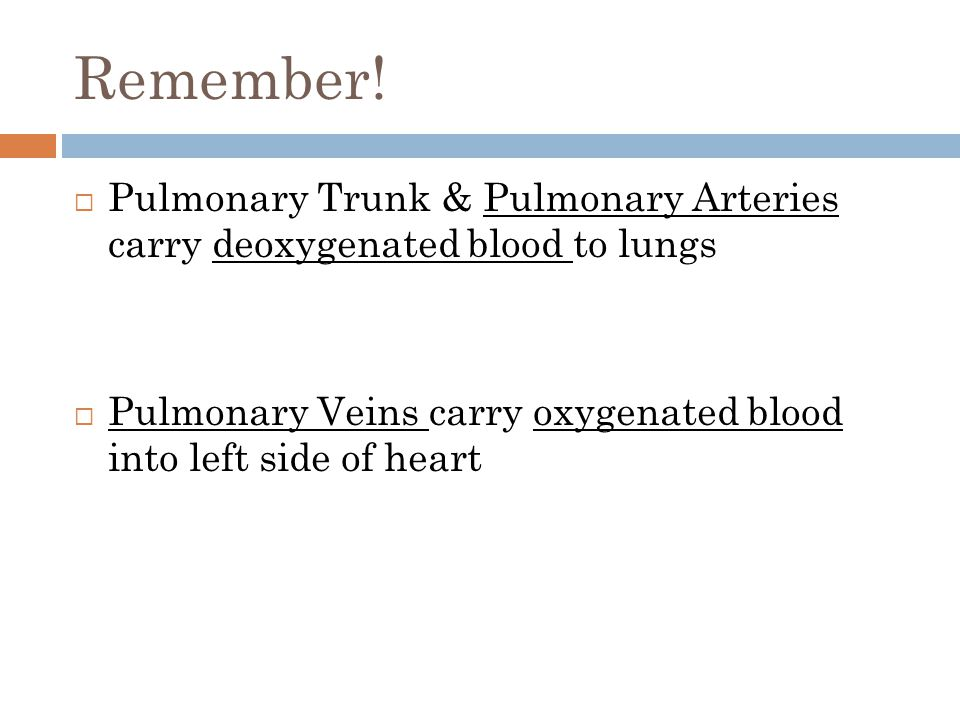 Remember!  Pulmonary Trunk & Pulmonary Arteries carry deoxygenated blood to lungs  Pulmonary Veins carry oxygenated blood into left side of heart