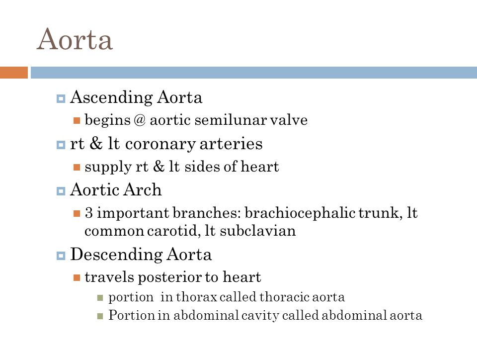 Aorta  Ascending Aorta begins @ aortic semilunar valve  rt & lt coronary arteries supply rt & lt sides of heart  Aortic Arch 3 important branches: