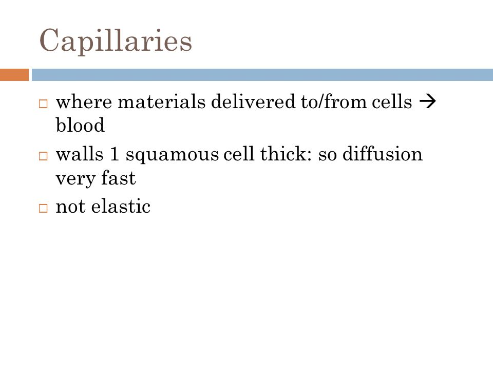Capillaries  where materials delivered to/from cells  blood  walls 1 squamous cell thick: so diffusion very fast  not elastic