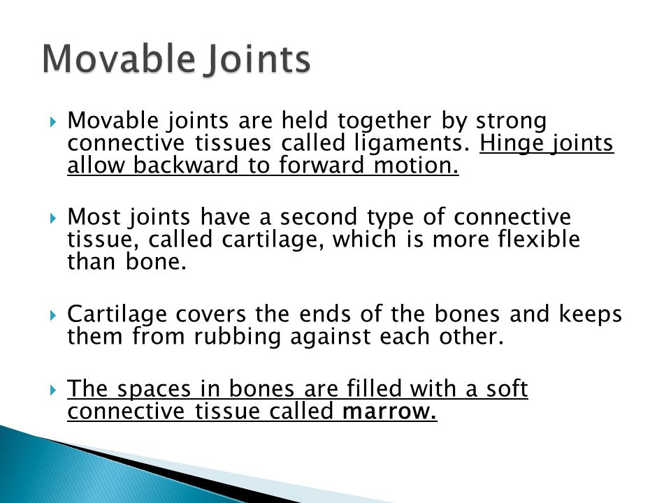  Movable joints are held together by strong connective tissues called ligaments.