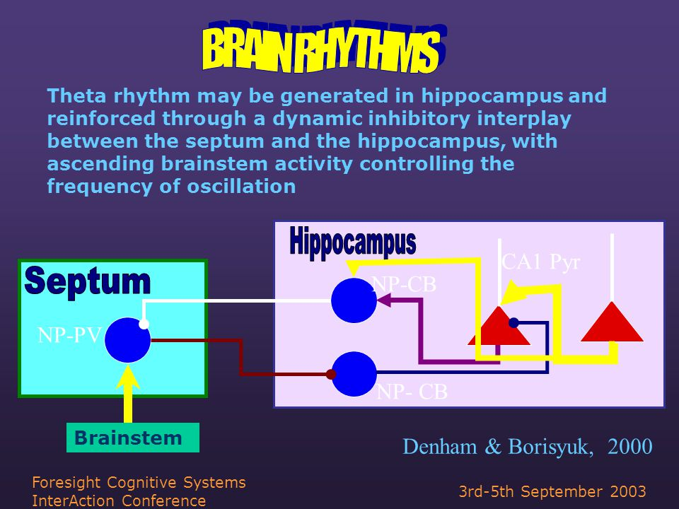 3rd-5th September 2003 Foresight Cognitive Systems InterAction Conference NP-PV NP-CB CA1 Pyr Denham & Borisyuk, 2000 Theta rhythm may be generated in hippocampus and reinforced through a dynamic inhibitory interplay between the septum and the hippocampus, with ascending brainstem activity controlling the frequency of oscillation Brainstem