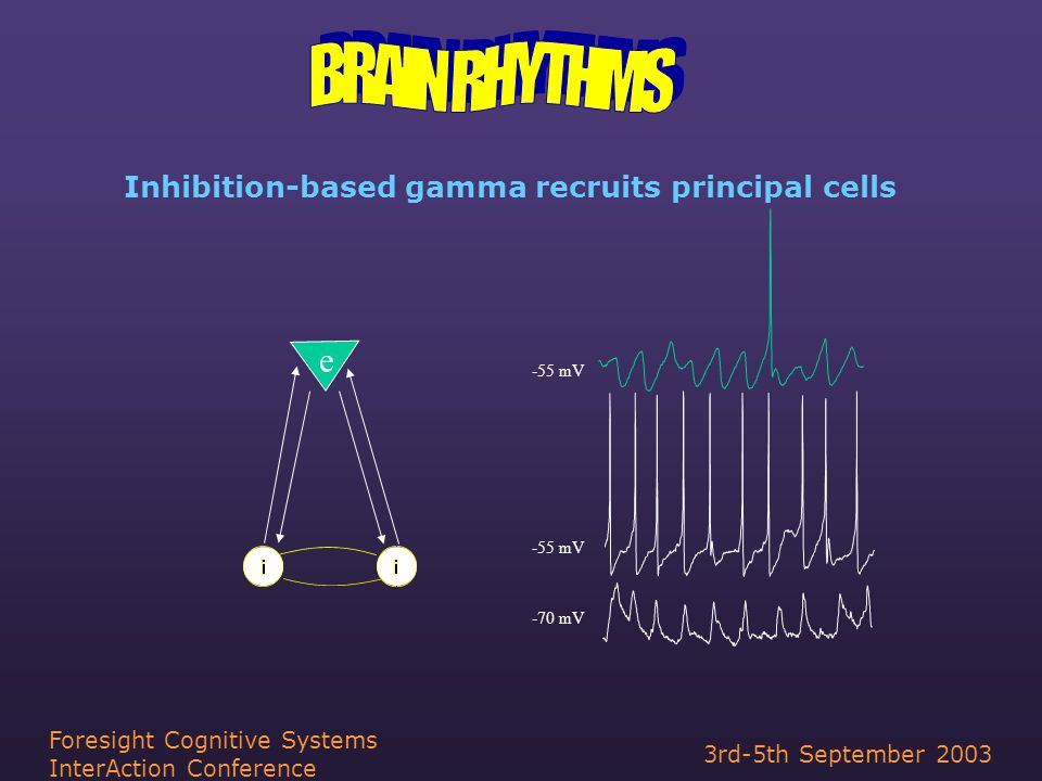 3rd-5th September 2003 Foresight Cognitive Systems InterAction Conference Inhibition-based gamma recruits principal cells e -55 mV -70 mV