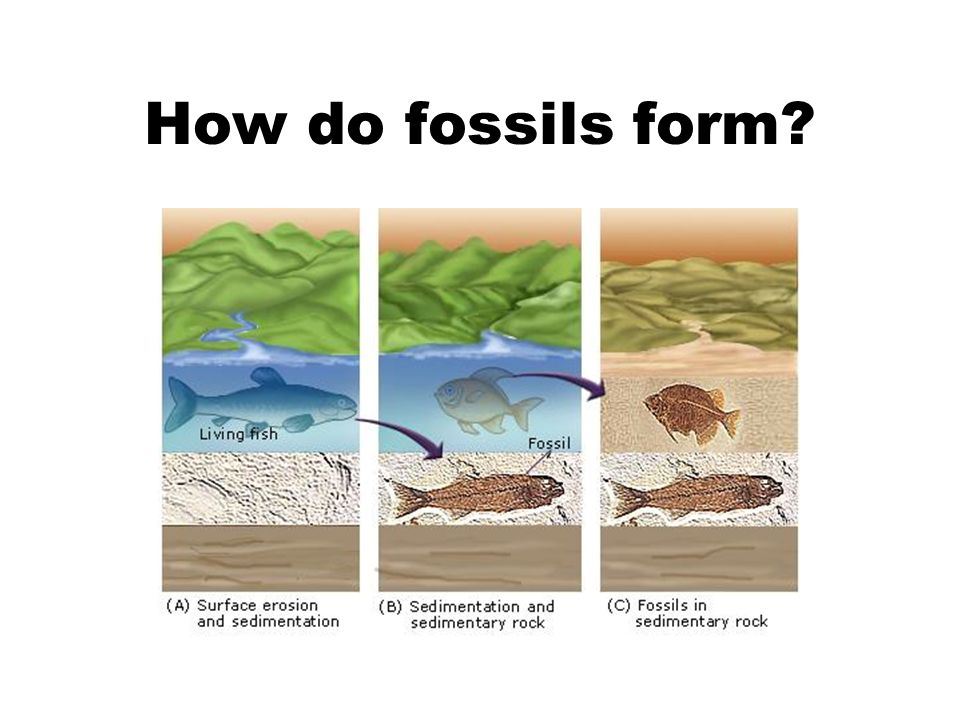 10-1 Fossils What is a fossil? Fossils are the preserved remains ...