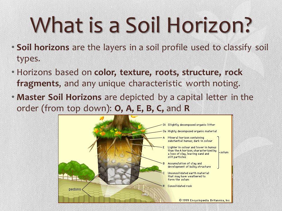 Worksheets Soil Profile Worksheet soil profile worksheets grade 6 intrepidpath coloring worksheet worksheets