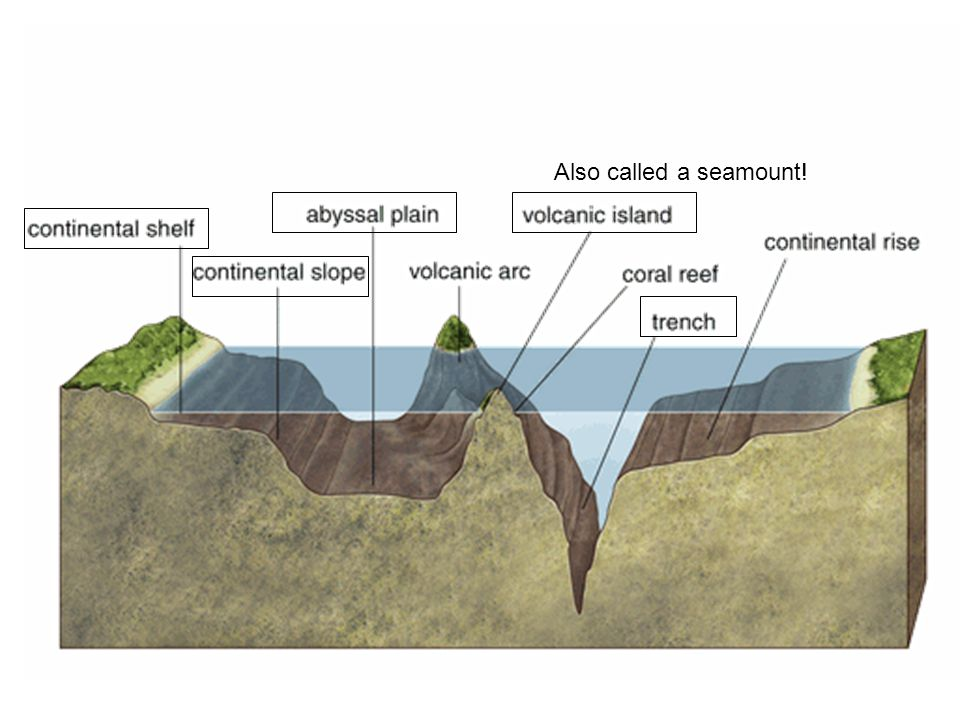 What are large flat plains located on the ocean floor 1Trenches – Ocean Floor Diagram Worksheet