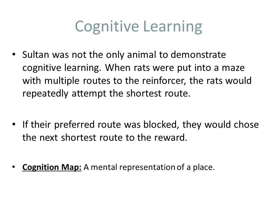 Cognitive Learning Sultan was not the only animal to demonstrate cognitive learning.