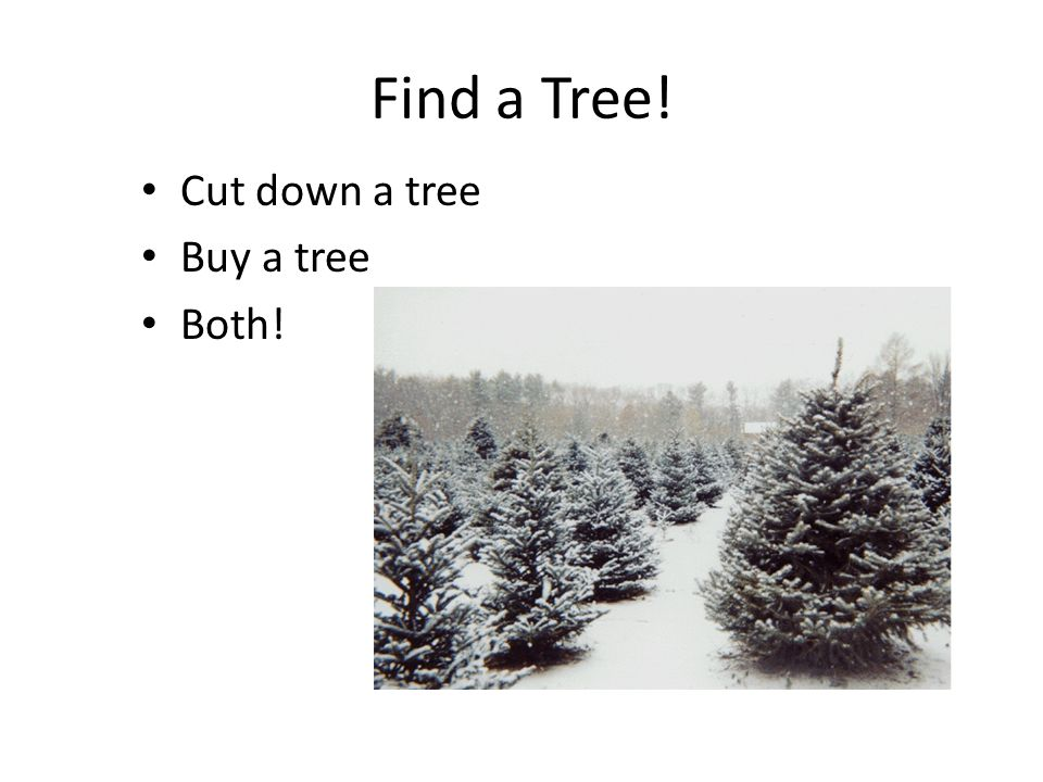 Find a Tree! Cut down a tree Buy a tree Both!