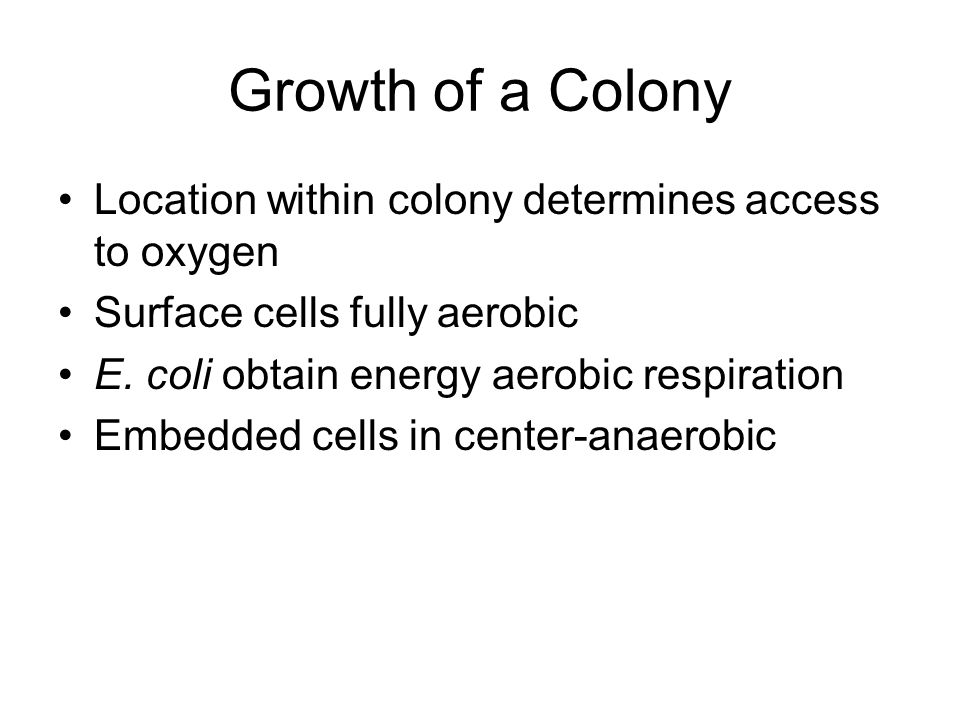 Growth of a Colony Location within colony determines access to oxygen Surface cells fully aerobic E.
