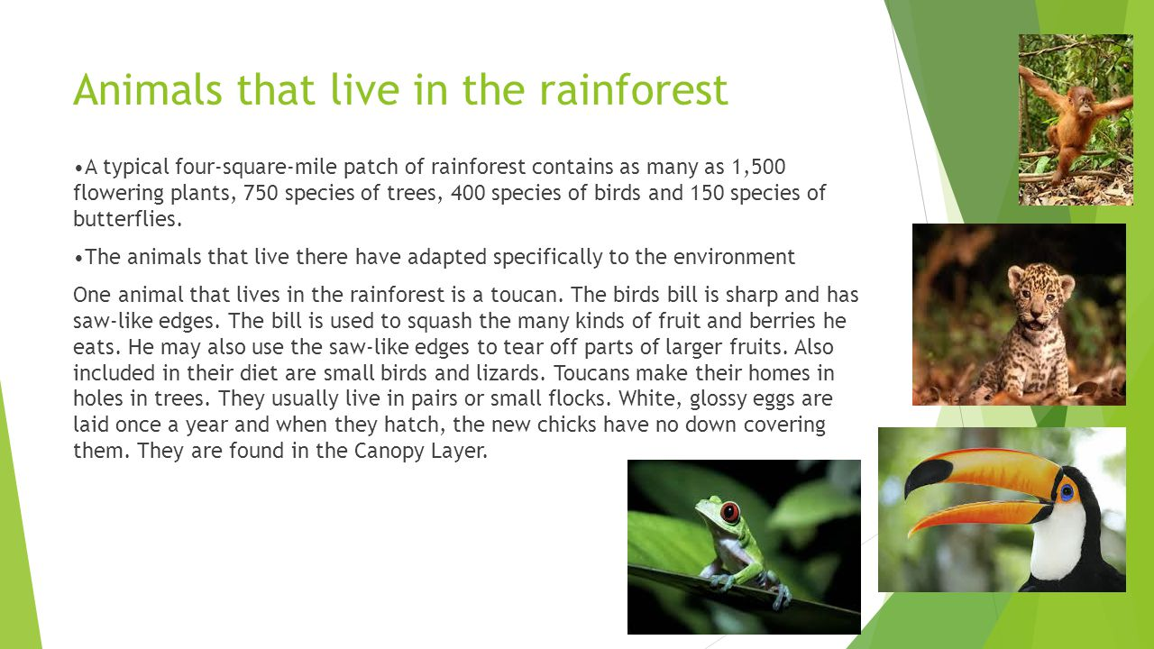 Tropical Rainforest Animals Facts - Most Popular Rainforest In The ...