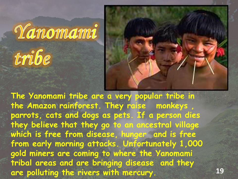 The Yanomami tribe are a very popular tribe in the Amazon rainforest.