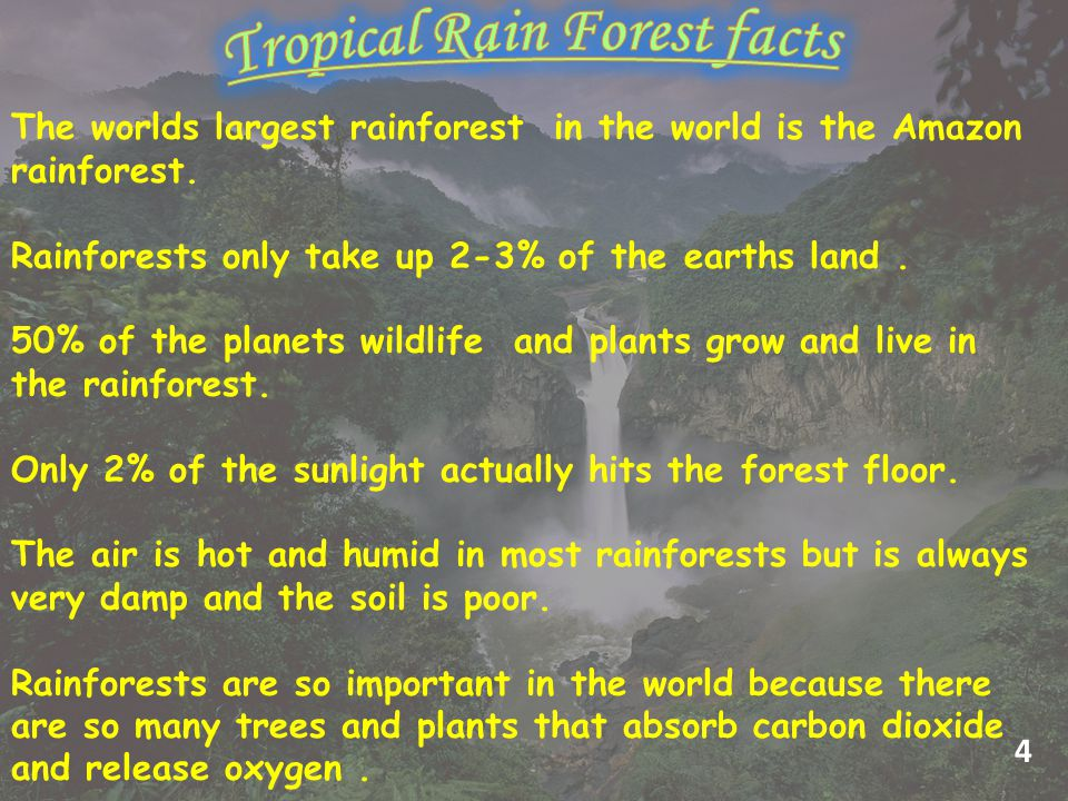 The worlds largest rainforest in the world is the Amazon rainforest.