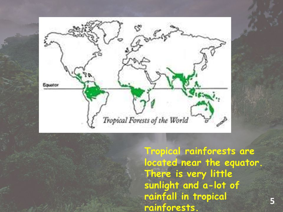 Tropical rainforests are located near the equator.