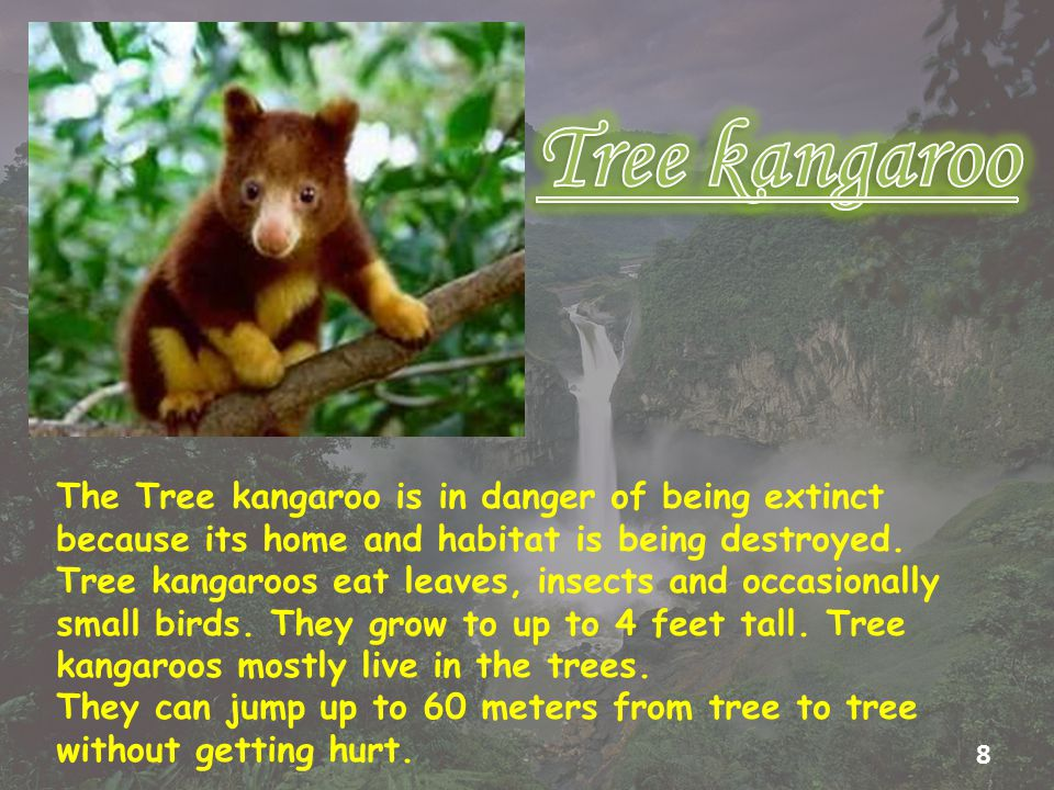 The Tree kangaroo is in danger of being extinct because its home and habitat is being destroyed.
