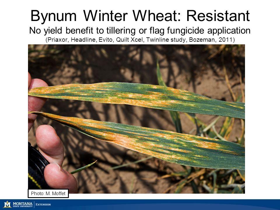 Stripe rust and foliar fungicide use Dr. Mary Burrows Montana ... : quilt xcel fungicide - Adamdwight.com