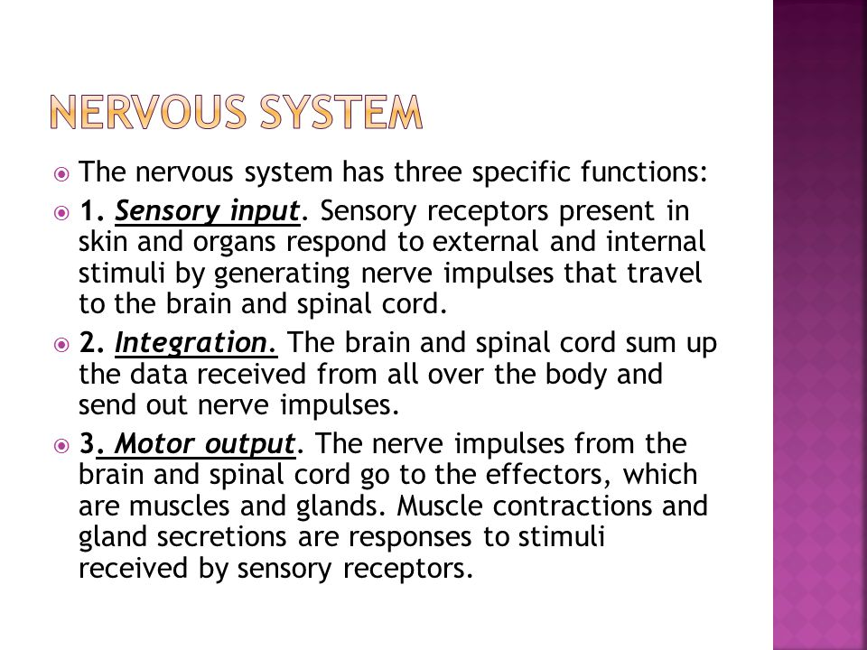  The nervous system has three specific functions:  1.