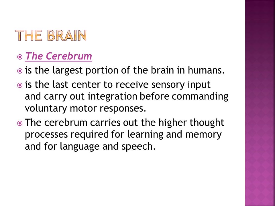  The Cerebrum  is the largest portion of the brain in humans.