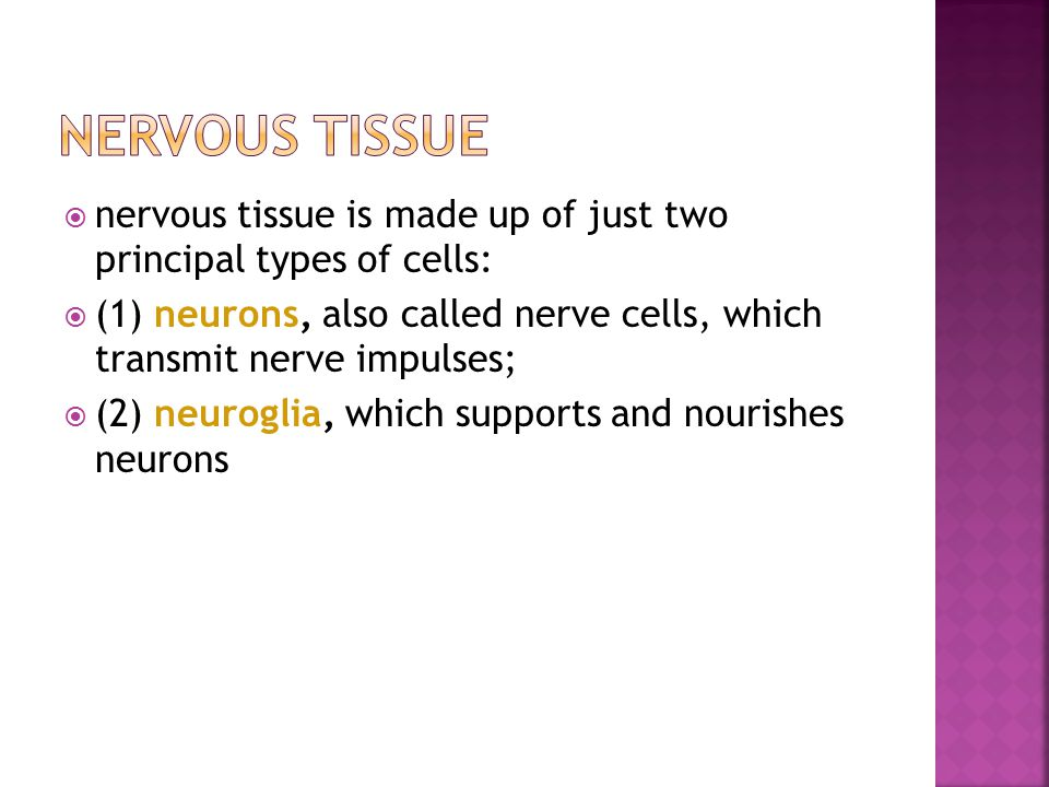  nervous tissue is made up of just two principal types of cells:  (1) neurons, also called nerve cells, which transmit nerve impulses;  (2) neuroglia, which supports and nourishes neurons