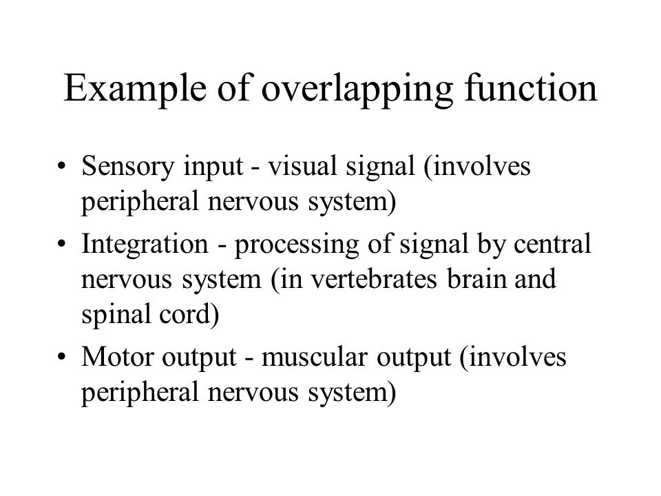 Example of overlapping function Sensory input - visual signal (involves peripheral nervous system) Integration - processing of signal by central nervous system (in vertebrates brain and spinal cord) Motor output - muscular output (involves peripheral nervous system)