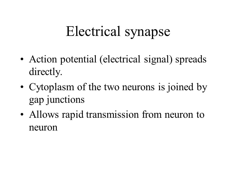 Electrical synapse Action potential (electrical signal) spreads directly.