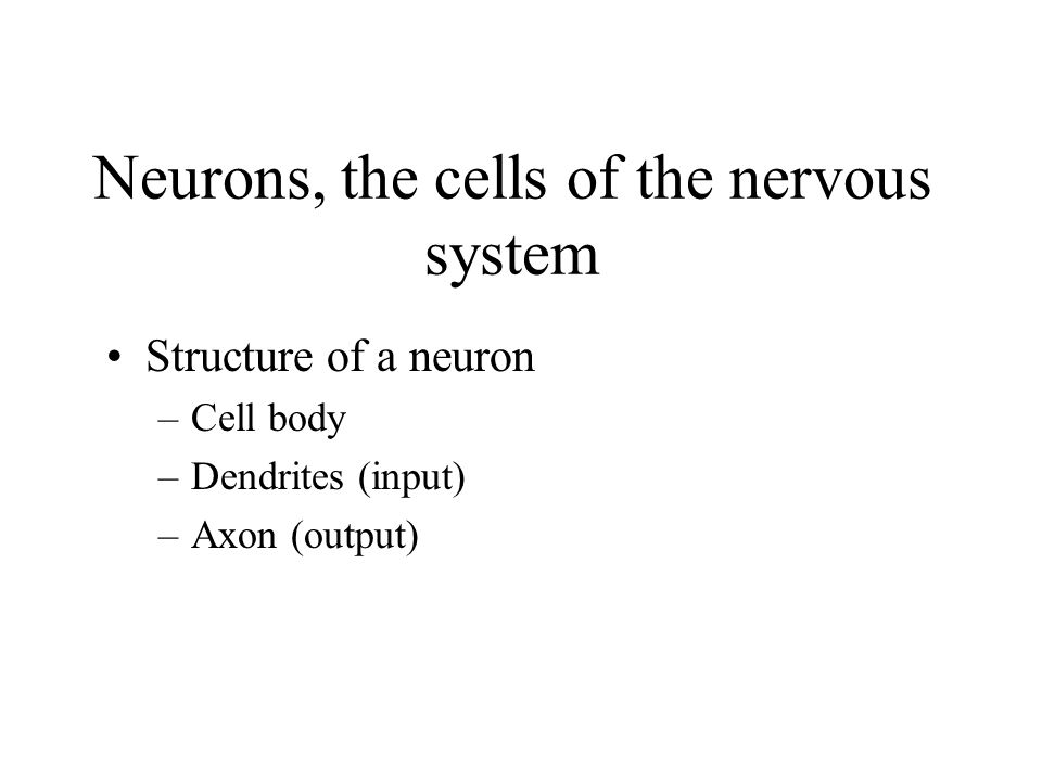 Neurons, the cells of the nervous system Structure of a neuron –Cell body –Dendrites (input) –Axon (output)