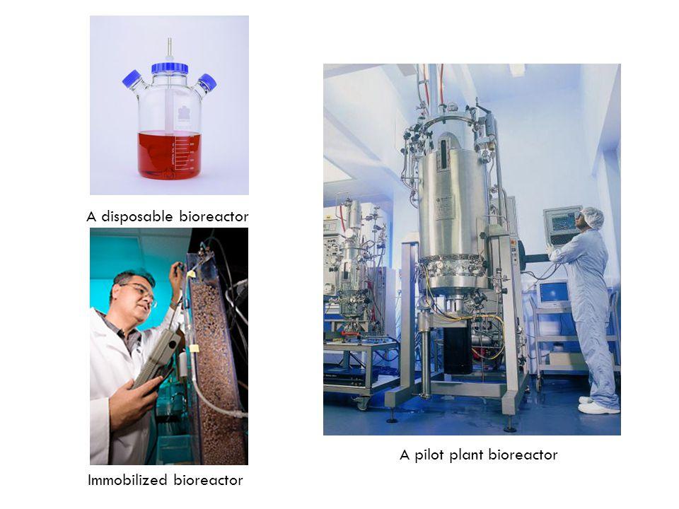 A disposable bioreactor Immobilized bioreactor A pilot plant bioreactor