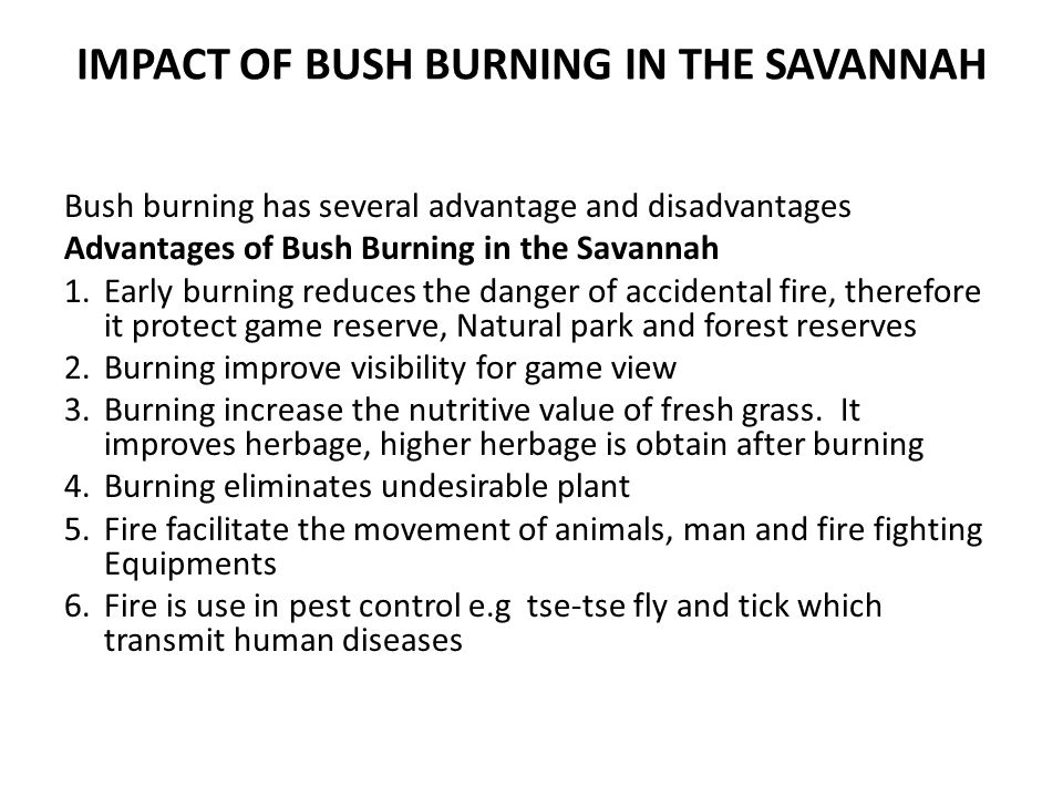 IMPACT OF BUSH BURNING IN THE SAVANNAH Bush burning has several advantage and disadvantages Advantages of Bush Burning in the Savannah 1.Early burning reduces the danger of accidental fire, therefore it protect game reserve, Natural park and forest reserves 2.Burning improve visibility for game view 3.Burning increase the nutritive value of fresh grass.