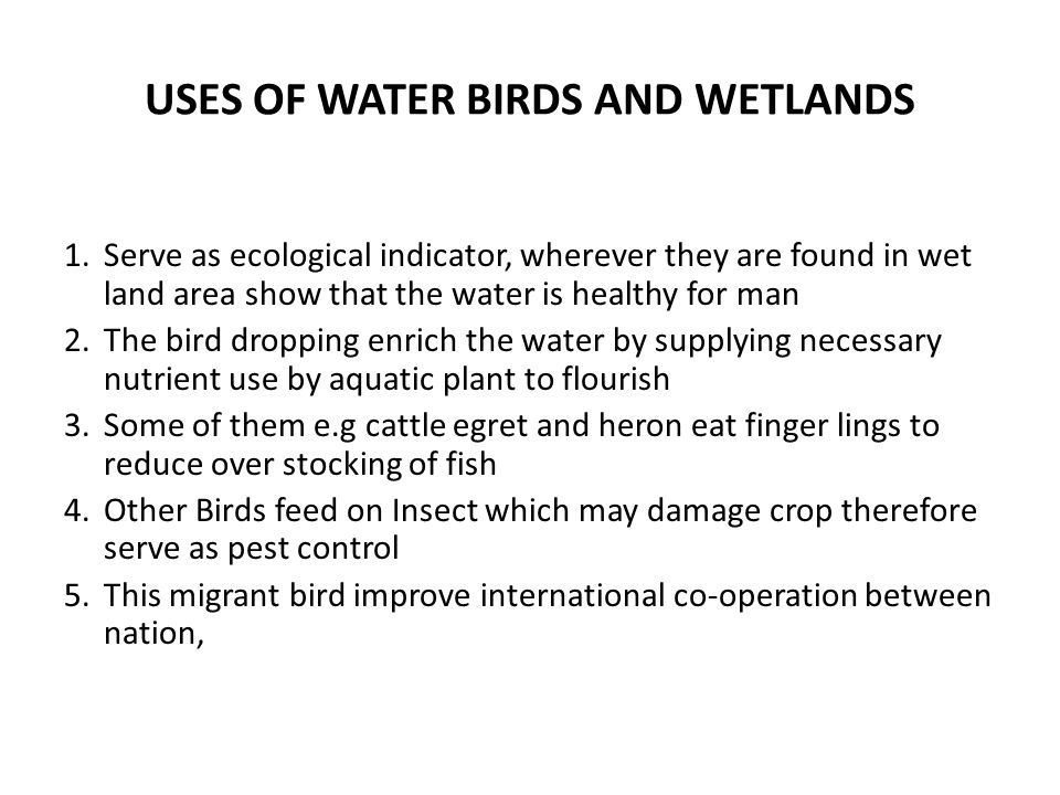 USES OF WATER BIRDS AND WETLANDS 1.Serve as ecological indicator, wherever they are found in wet land area show that the water is healthy for man 2.The bird dropping enrich the water by supplying necessary nutrient use by aquatic plant to flourish 3.Some of them e.g cattle egret and heron eat finger lings to reduce over stocking of fish 4.Other Birds feed on Insect which may damage crop therefore serve as pest control 5.This migrant bird improve international co-operation between nation,