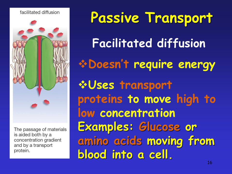 16 Passive Transport Facilitated diffusion  Doesn't require energy  Uses transport proteins to move high to low concentration Examples: Glucose or amino acids moving from blood into a cell.
