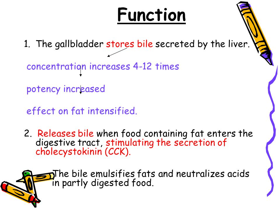 Function 1.The gallbladder stores bile secreted by the liver.