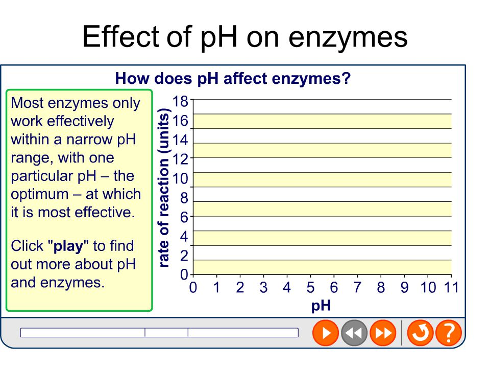 Worksheets Enzyme Activity Worksheet effect of temperature and ph on enzyme activity worksheet answers worksheets