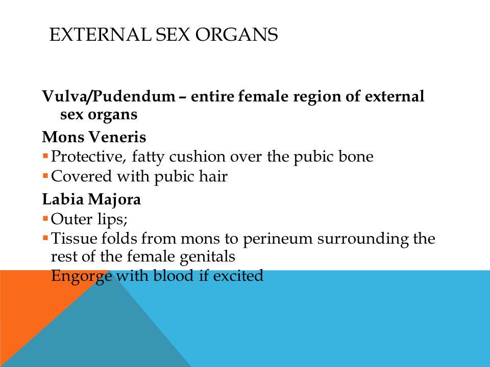 EXTERNAL SEX ORGANS Vulva/Pudendum – entire female region of external sex organs Mons Veneris  Protective, fatty cushion over the pubic bone  Covere