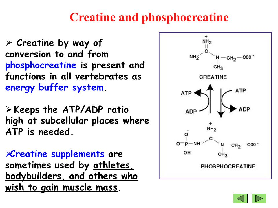 Creatine and phosphocreatine  Creatine by way of conversion to and from phosphocreatine is present and functions in all vertebrates as energy buffer system.
