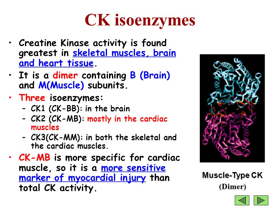 CK isoenzymes Creatine Kinase activity is found greatest in skeletal muscles, brain and heart tissue.