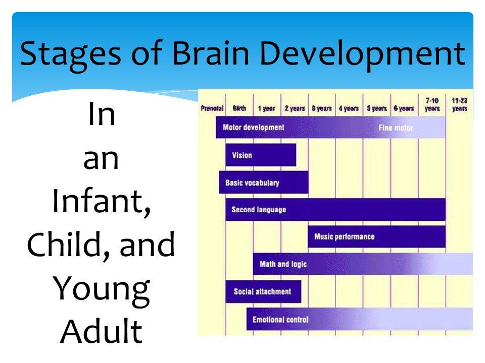 infant brain development