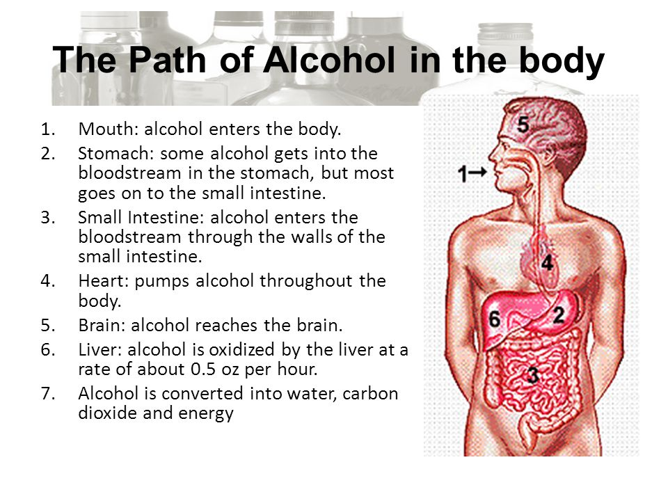 The Path of Alcohol in the body 1.Mouth: alcohol enters the body.
