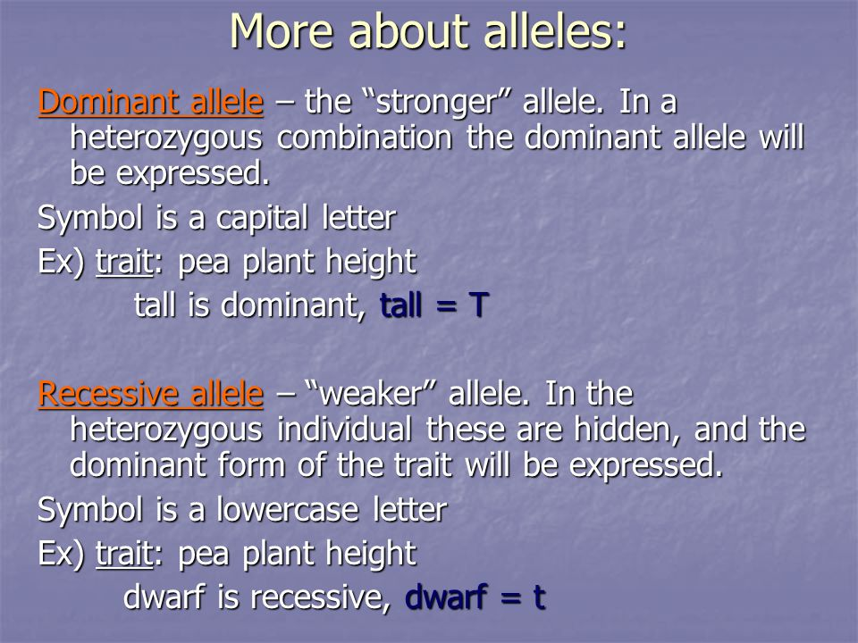 More about alleles: Dominant allele – the stronger allele.