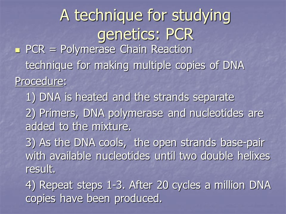 A technique for studying genetics: PCR PCR = Polymerase Chain Reaction PCR = Polymerase Chain Reaction technique for making multiple copies of DNA Procedure: 1) DNA is heated and the strands separate 2) Primers, DNA polymerase and nucleotides are added to the mixture.