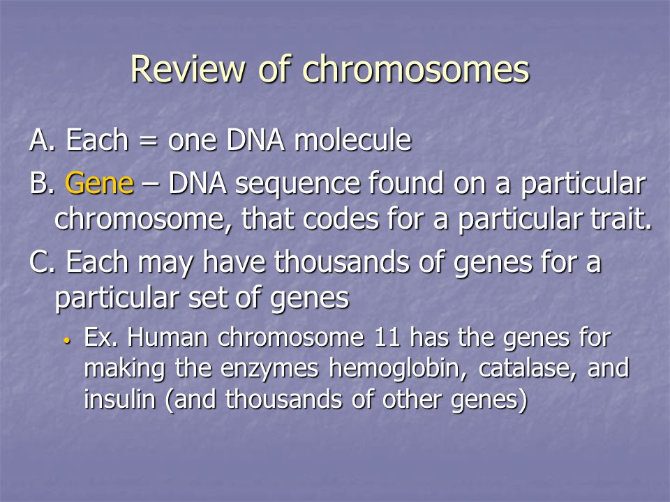 Review of chromosomes A. Each = one DNA molecule B.