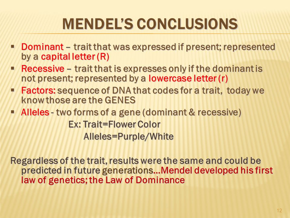 MENDEL'S CONCLUSIONS  Dominant – trait that was expressed if present; represented by a capital letter (R)  Recessive – trait that is expresses only if the dominant is not present; represented by a lowercase letter (r)  Factors: sequence of DNA that codes for a trait, today we know those are the GENES  Alleles - two forms of a gene (dominant & recessive) Ex: Trait=Flower Color Alleles=Purple/White Alleles=Purple/White Regardless of the trait, results were the same and could be predicted in future generations…Mendel developed his first law of genetics; the Law of Dominance 12