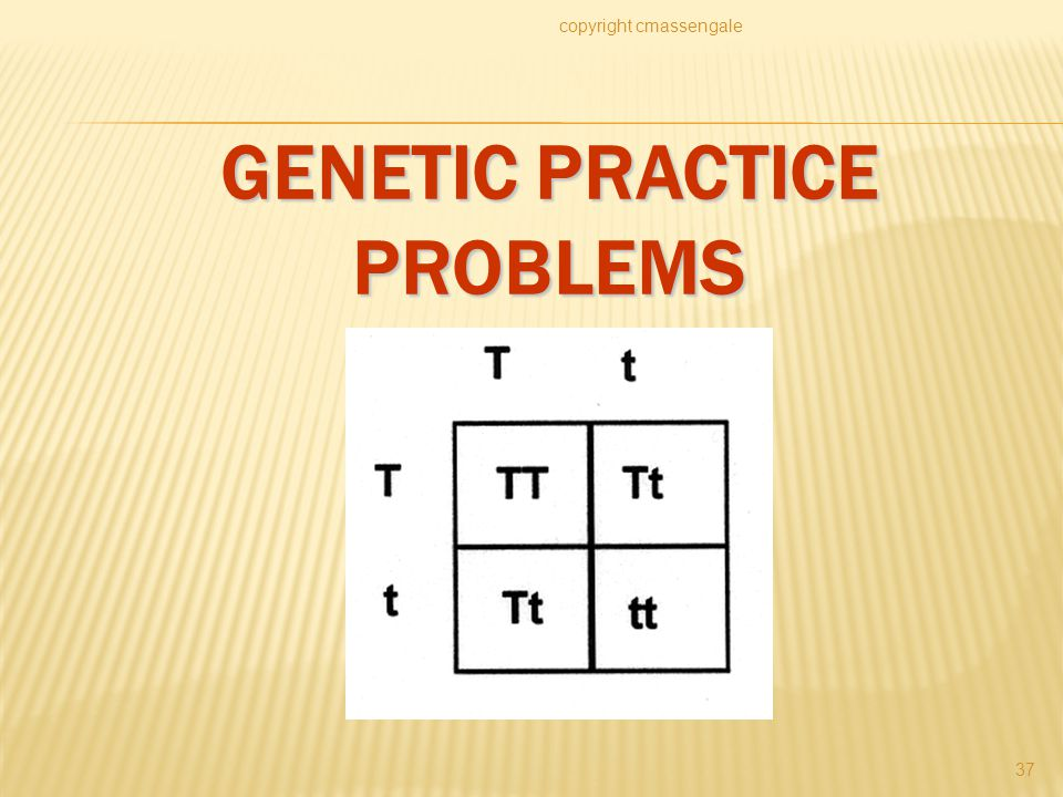 GENETIC PRACTICE PROBLEMS copyright cmassengale 37