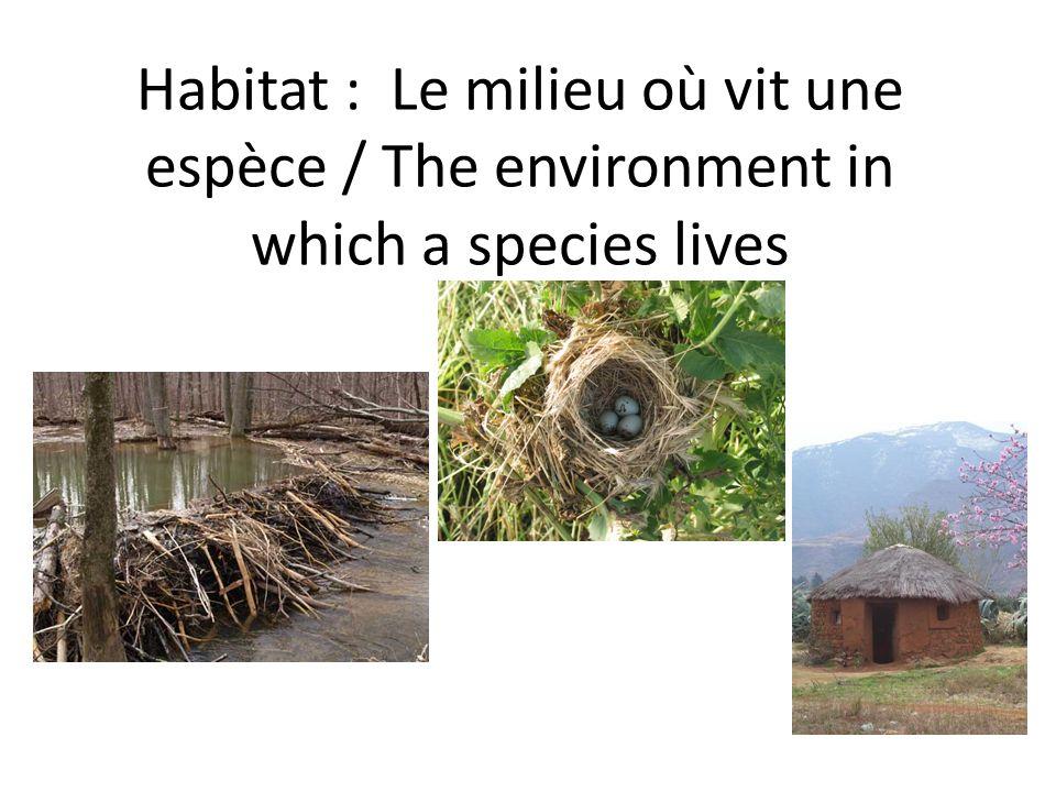 Habitat : Le milieu où vit une espèce / The environment in which a species lives